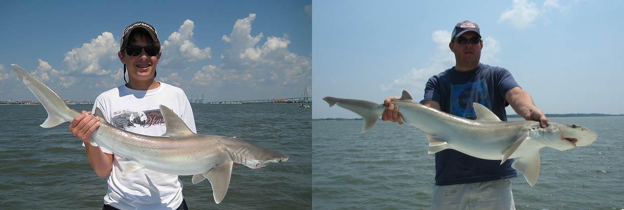 Shark fishing charleston fun fishing charleston sc for Deep sea fishing charters charleston sc