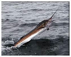 Preferably fishing placesplaya carmencalicapunta venado for Deep sea fishing charters charleston sc